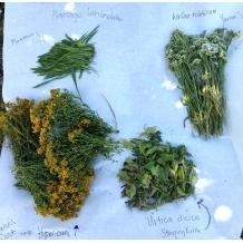 herbs2017.jpg